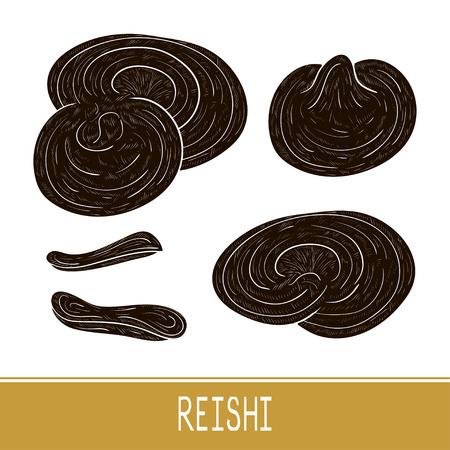 Reishi. Mushroom. Set. Sketch. Black silhouette. Ilustrace