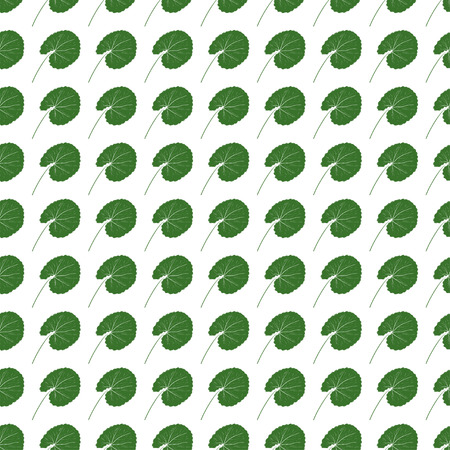 Gotu kola. Super food. Leaves. Background, wallpaper, seamless. Green silhouette on white background.