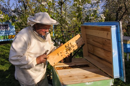 opens: beekeeper opens the hive, bees, honey, apiary