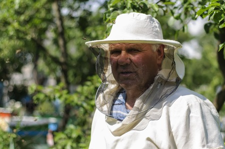 apiary: Beekeeper is working with bees and beehives on the apiary