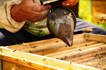 apiculture: Smoker beekeepers tool to keep bees away from hive, Apiculture Stock Photo