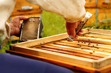 beekeeper working with bees using Beekeeping stock smoker Stock Photo