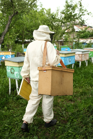 protective suit: beekeeper in protective suit works on an apiary Stock Photo