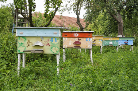 apiary: Hives of bees in the apiary, Apiculture