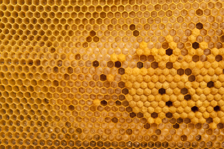 Not capped brood cells of the honey bee