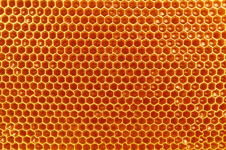 fresh honey in cells. Close up of honeycomb