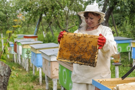 woman beekeeper looks after bees in the hive Standard-Bild