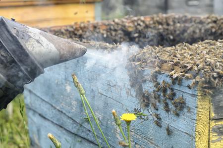 Young farm beekeeper boy using a smoker on bee yard