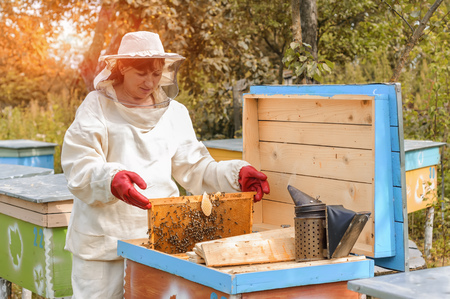 woman beekeeper looks after bees in the hive Stock Photo