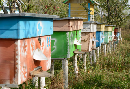 pied: Hives of bees in the apiary, beekeeping Stock Photo