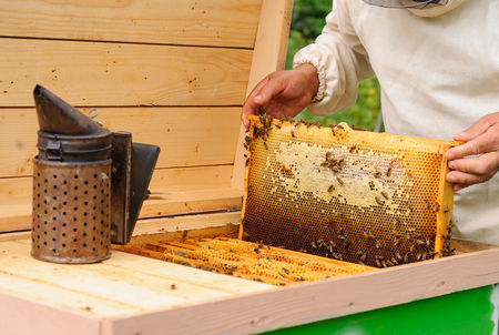 filled out: The beekeeper takes out from the hive honeycomb filled with fresh honey.