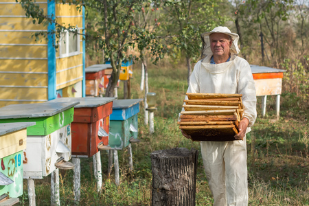 Beekeeper is working with bees and beehives on the apiary. Beekeeper on apiary. Stock Photo