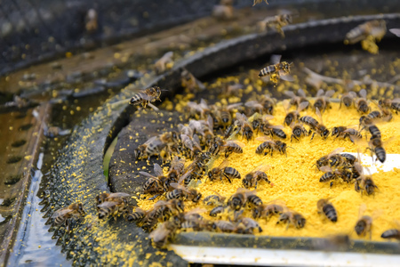 apiculture: Bait bee spring. Food for bees. Apiculture.