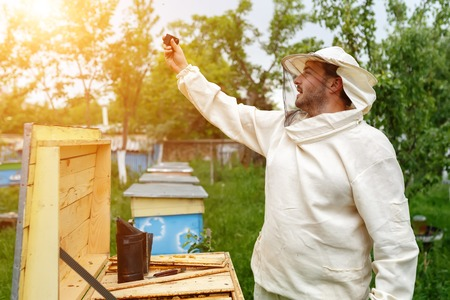 Beekeeper removes itself on the apiary Action Camera. Video Blog
