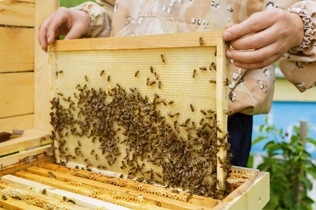Beekeeper is working with bees and beehives on the apiary. Apiculture. Stock Photo