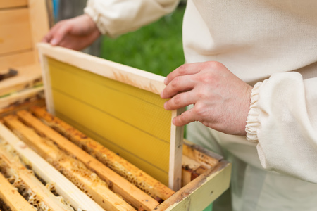 comb: The beekeeper places the hive a new framework for honey. Honeycomb.