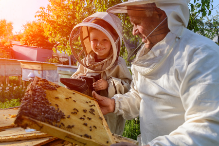 Experienced beekeeper grandfather teaches his grandson caring for bees. Apiculture. The transfer of experience. Stock Photo - 77757951
