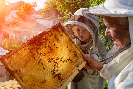숙련 된 양봉가 할아버지는 자신의 손자에게 꿀벌을 돌보는 법을 가르칩니다. 양봉. 경험 이전의 개념 스톡 콘텐츠