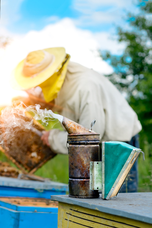apiculture: Old bee smoker. The beekeeper works on apiary near the hives. Beekeeping tool. Apiculture.