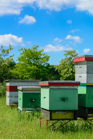 Apiary. Beehives in the apiary Apiculture