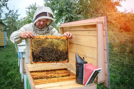 Apiary. The beekeeper works with bees near the hives. Apiculture.