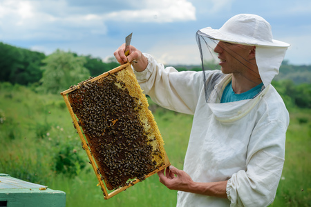 Apiary. The beekeeper works with bees near the hives. Apiculture Stock Photo - 87070739