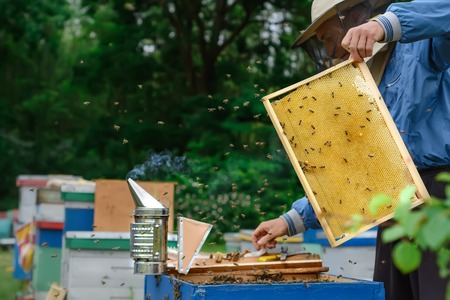 The beekeeper works with bees near the hives. Apiculture Stock Photo - 87635026