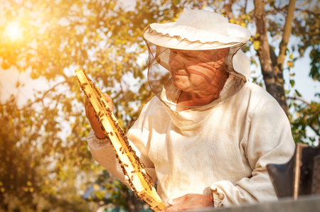 The beekeeper works with bees near the hives. Apiculture.