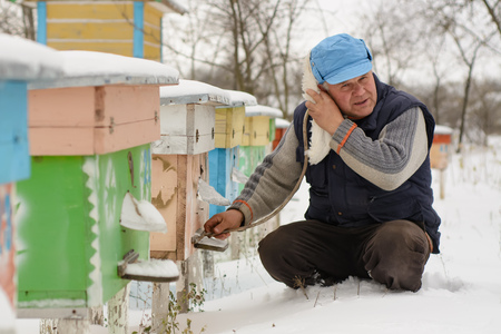 Winter on the apiary. Beekeeper winter monitors the status of bees in the hive. Winter bees in the hives in the yard.