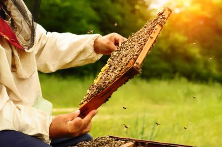 Imker hält eine Bienenwabe voller Bienen. Imker in der schützenden Arbeitskleidung, die Bienenwabenrahmen am Bienenhaus kontrolliert. Imkerei-Konzept Standard-Bild