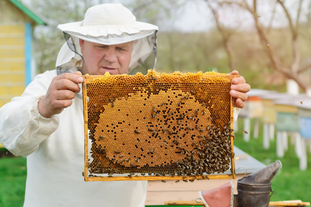 Cell with larvae of bees and young bees. Works on the apiaries in the spring. Stock Photo