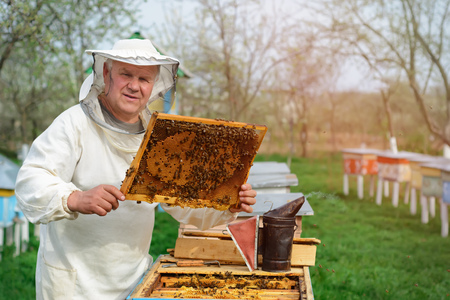 The beekeeper works on a beehive near the hives. Spring work on the apiary.