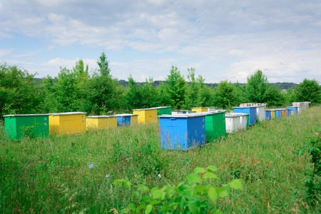 Bee hive boxes. The apiary is located on the edge of the forest