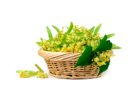 Flowers of linden in a basket on a white background. Flower tea from linden.