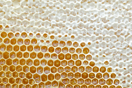 Honeycomb from a bee hive filled with golden honey in a full frame view. Background texture