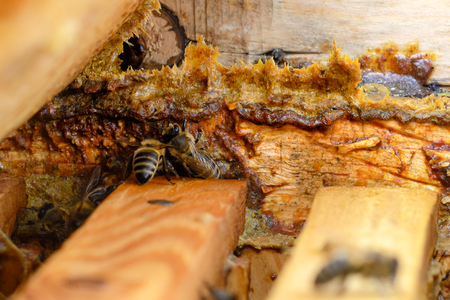 Propolis in the middle of a hive with bees. Bee glue. Bee products. Apitherapy. Apiculture.