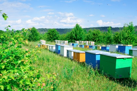Hives with bees in the apiaries on the outskirts of the forest.
