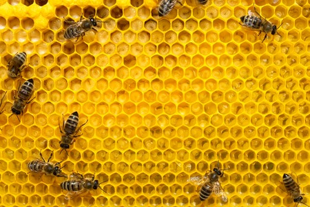 Bees on a cell with larvae. Bees Broods.