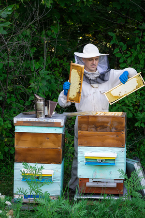 Closeup portrait of beekeeper holding a honeycomb full of bees. Beekeeper in protective workwear inspecting honeycomb frame at apiary. Beekeeping concept. Beekeeper harvesting honey Stock Photo
