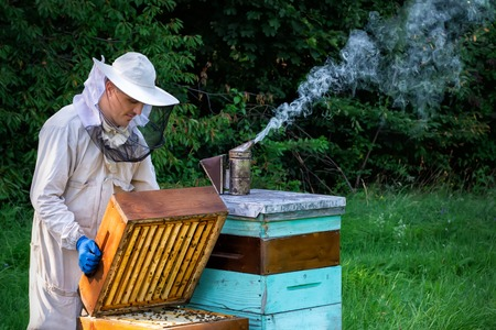 Beekeeper on apiary. Beekeeper is working with bees and beehives on the apiary. Apiculture concept. Stock Photo