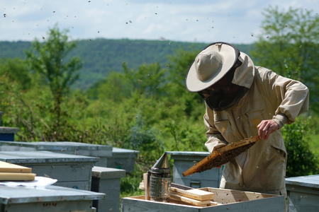 Beekeeper on apiary. Beekeeper is working with bees and beehives on the apiary. Stockfoto