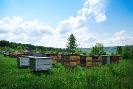 Beekeeper on apiary. Beekeeper is working with bees and beehives on the apiary 写真素材