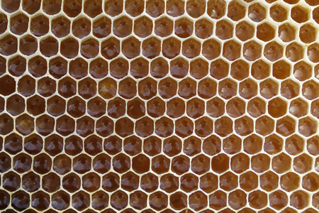 Filled honeycomb as background. Fresh honey. Healthy natural sweetener