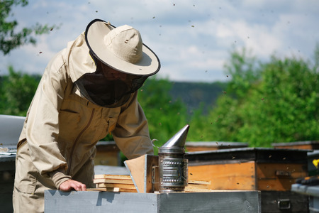 Beekeeper inspecting honeycomb frame at apiary at the summer day. Man working in apiary. Apiculture. Beekeeping concept 写真素材