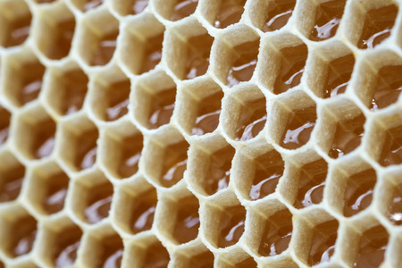 Filled honeycomb as background. Fresh honey. Healthy natural sweetener.