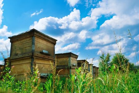 Apiary. A beehive from a tree stands on an apiary. The houses of the bees are placed on the green grass in the mountains. Private enterprise for beekeeping. Honey healthy food products.
