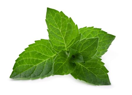 Green fresh mint leaves isolated on a white background.