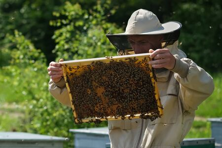 Beekeeper on apiary. Beekeeper is working with bees and beehives on the apiary. Reklamní fotografie