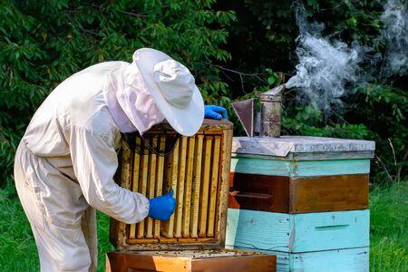 Young beekeeper working in the apiary. Beekeeping concept. Beekeeper harvesting honey.