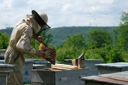 Beekeeper on apiary. Beekeeper is working with bees and beehives on the apiary Reklamní fotografie